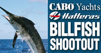 Gold Coast Game Fishing Club Cabo Hatteras Shootout logo