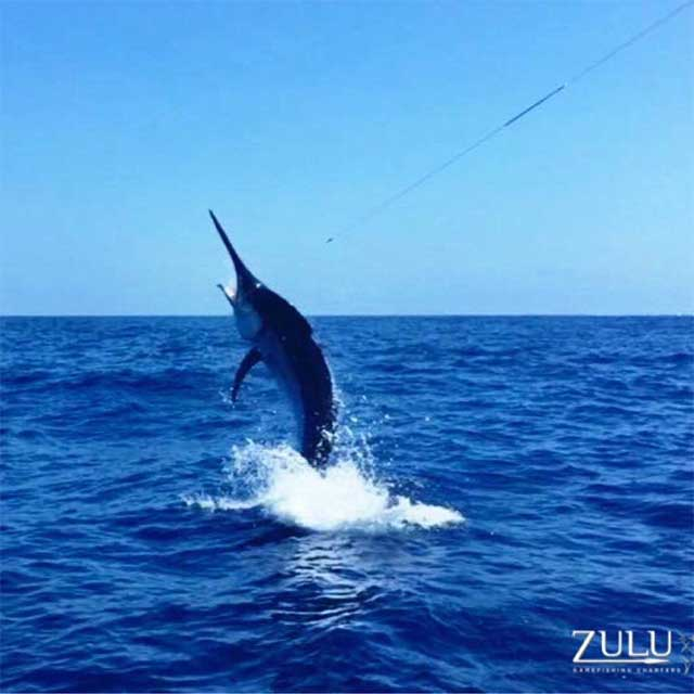 28th Lizard Island Black Marlin Classic in Cooktown, Australia